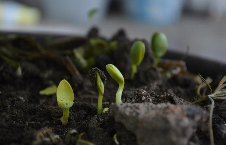 Compost e coltivazione