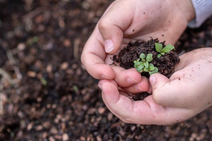 fertilizzante dato dal compost